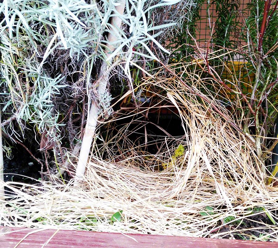 Nest von Ente Esemralda