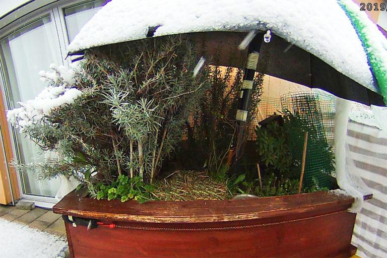 Esmeralda im Schnee